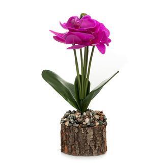 Mondecor Kütük Saksıda Orkide