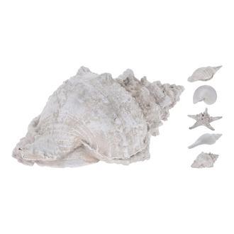 Q-Art Deniz Kabuğu Asorti 20,5 cm