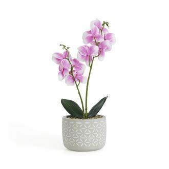 Objevi Beton Saksıda Real Touch  Orkide Pembe 12x35 cm