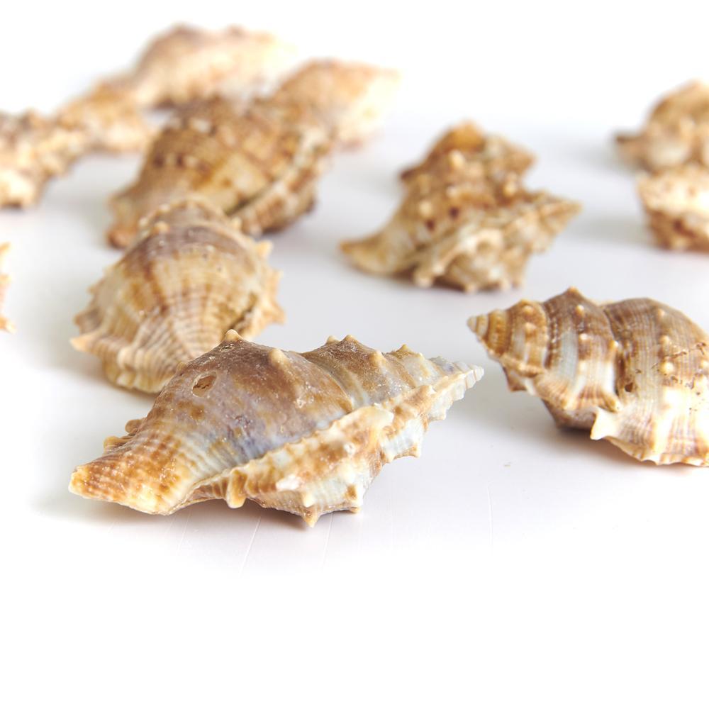 Q-Art Doğal Deniz Kabukları - Asorti