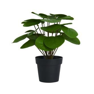Q-Art Saksıda Yapay Pılea Bitkisi 25  cm